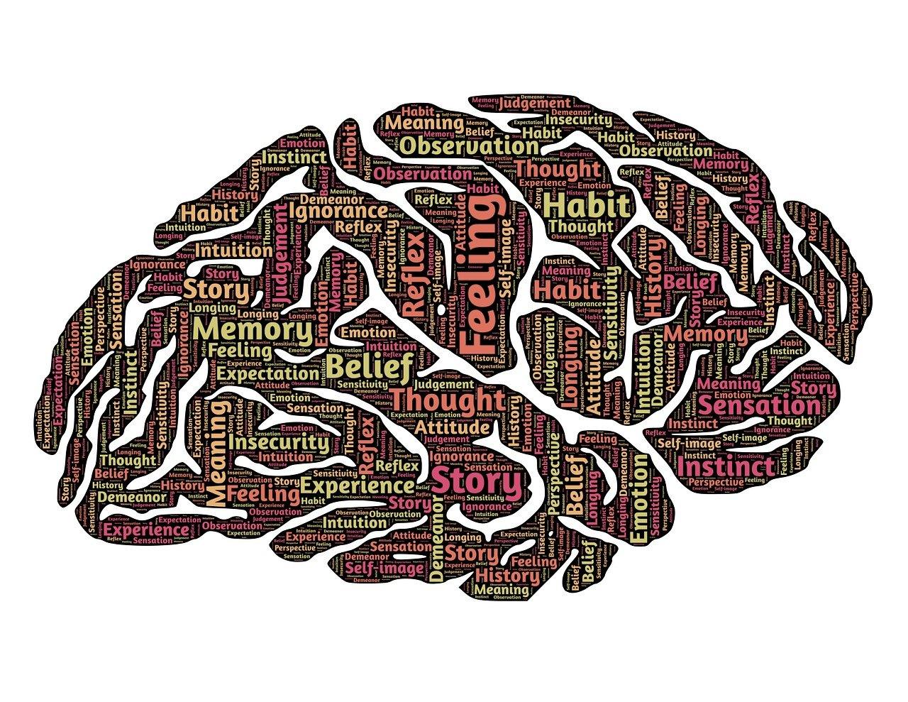 brain, mind, mindset